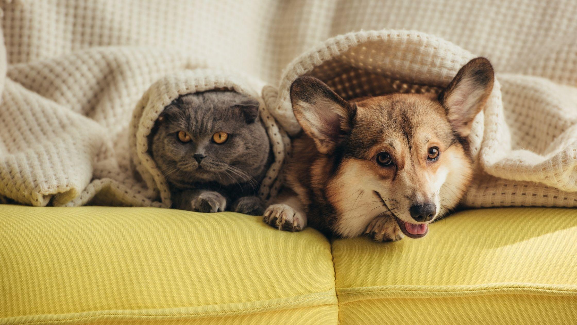 jak wzmocnić odpornośćpsa i kota