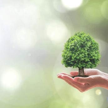 Scanvet Troska o środowisko