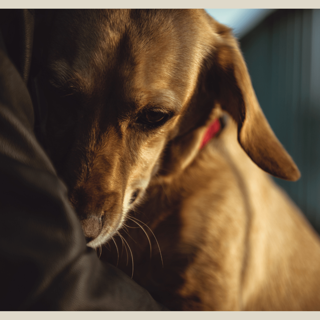 Sylwester z psem