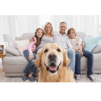 Scanvet rodzina