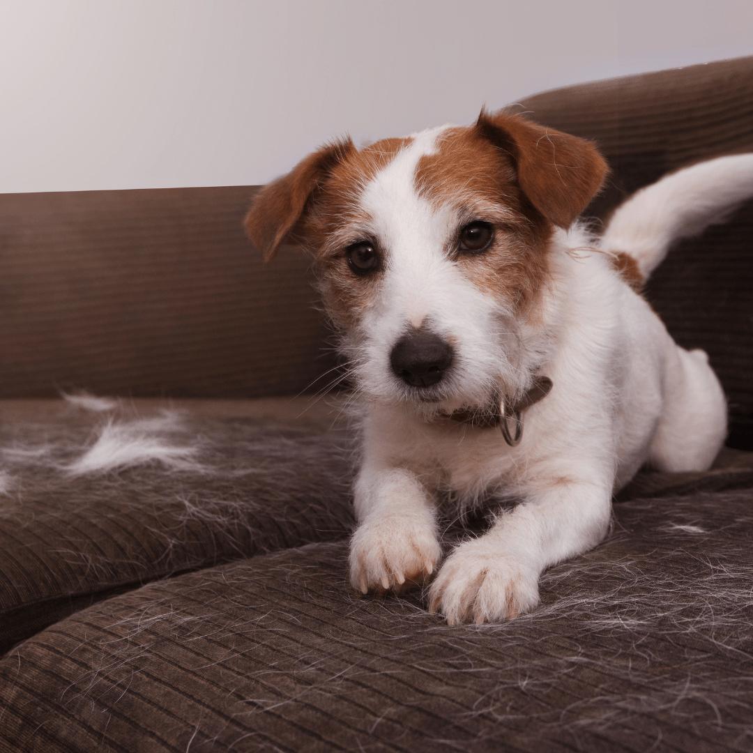 wypadanie sierści u psa