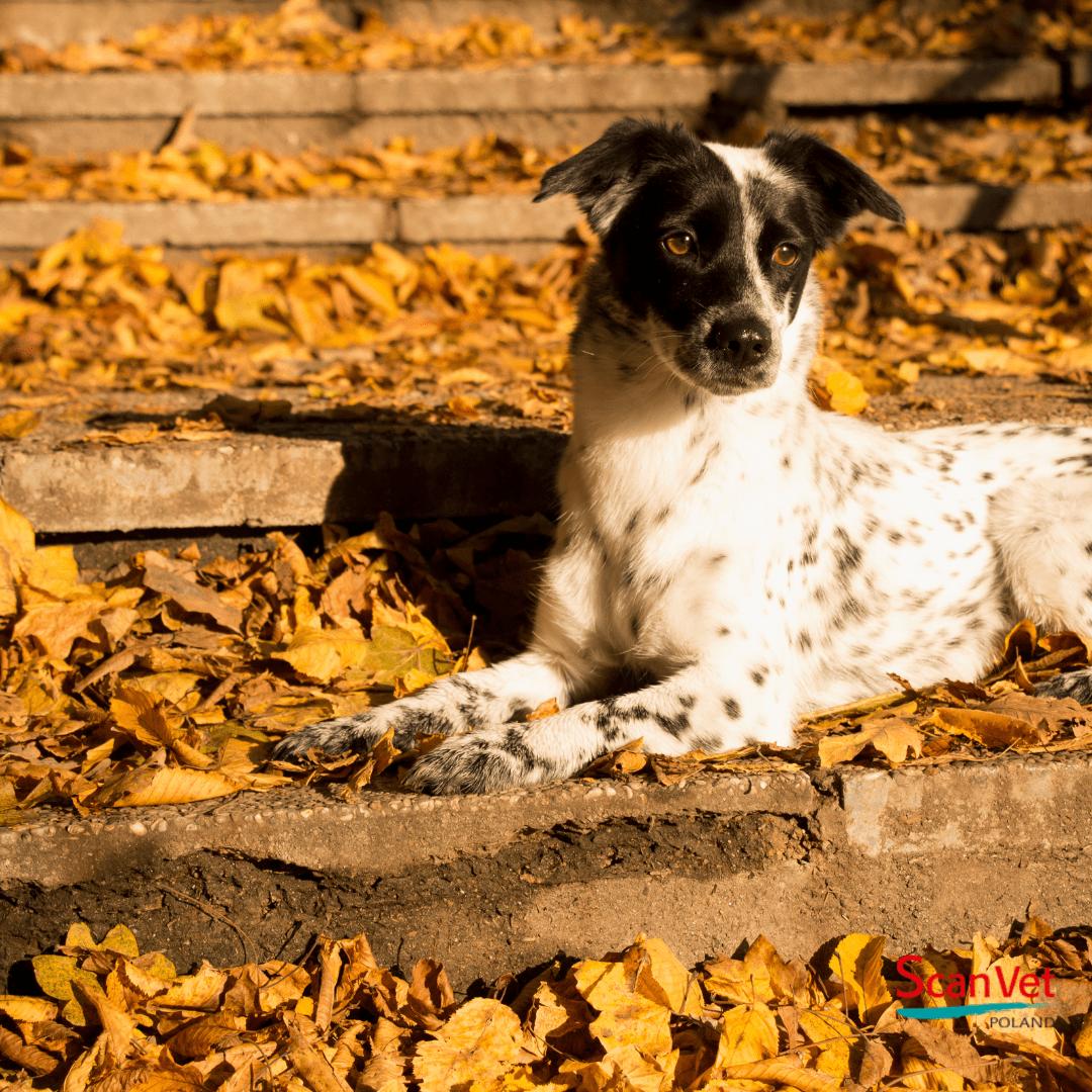 zadbaj o psa jesienią